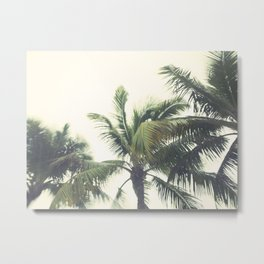 Wind + Palms / Tropical Photography Metal Print