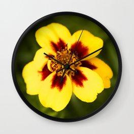 Jaguar Marigold Bud to Bloom Wall Clock