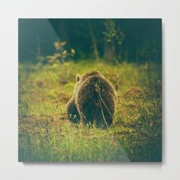 Brown bear cub Metal Print