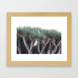 Dragon of San Diego Framed Art Print