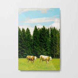 Doing the cow walk Metal Print