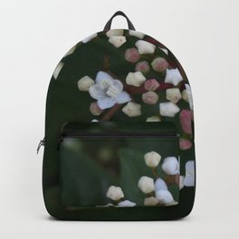 Viburnum tinus buds and flowers Backpack