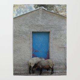 Sheep to Door Poster