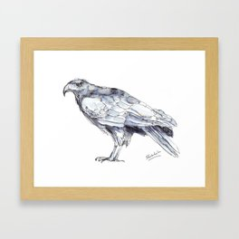 Hawk, Study in Blue and Black Framed Art Print
