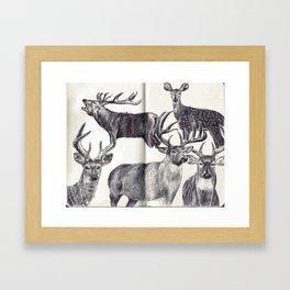 Deers Framed Art Print