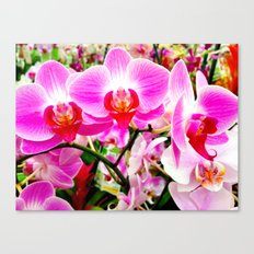 Orchid Row Canvas Print