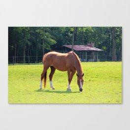 Rustic Scene Canvas Print