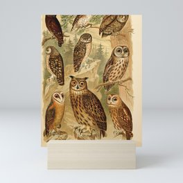 Vintage Infographic Print - Eagle Owls; Scops Owl; Boreal Owl; Little Owl; Barn Owl (1902) Mini Art Print
