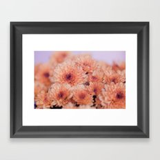 Chrysanthemum flowers 8605 Framed Art Print