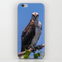A Bird's Stare iPhone Skin