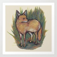 coyote Art Prints featuring Coyote by Kelsey Oseid