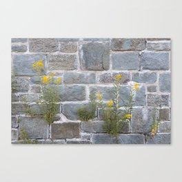 Blooming on Hard Rocks Canvas Print