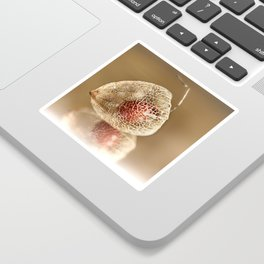 Physalis on gold Sticker