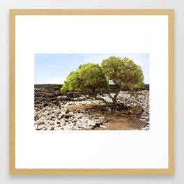 Hawaiian Tree Aroudn Lava Rocks Framed Art Print