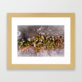 Japanese Knotweed Framed Art Print