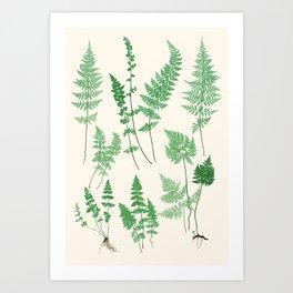 Ferns on Cream I - Botanical Print Art Print