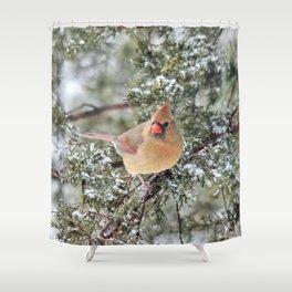Frosty Female Cardinal Shower Curtain