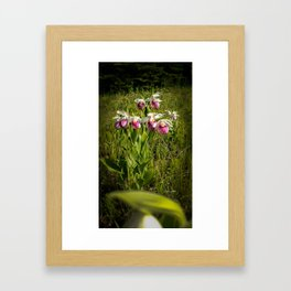 Kayla's Lady's Slippers Framed Art Print