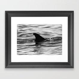Dolphin Fin  Framed Art Print