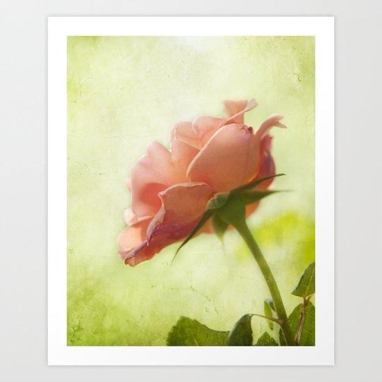 Vintage light pink rose Art Print