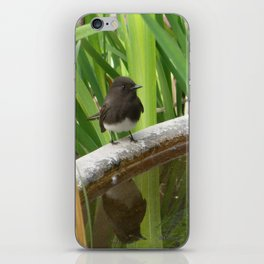 Black Phoebe at the Fountain iPhone Skin