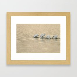 Whimsical White Pelicans Dance Framed Art Print
