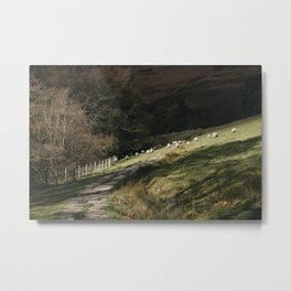 Stone footpath and grazing sheep. Edale, Derbyshire, UK. Metal Print