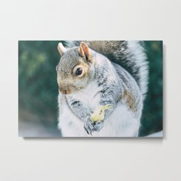 Squirrely Snacks Metal Print