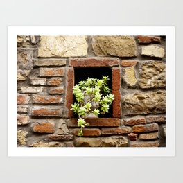 Plant in the Wall Art Print