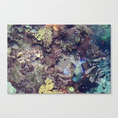 coral waters Canvas Print