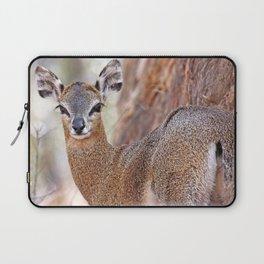 Klipspringer, Africa wildlife Laptop Sleeve