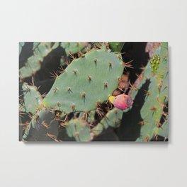 Prickly and Pink Metal Print
