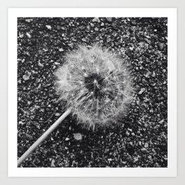 Dandelion in black and white Art Print
