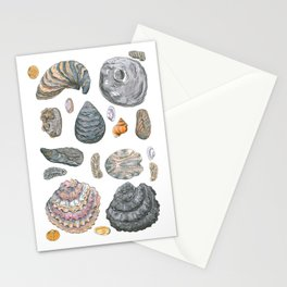 Normandy's shells Stationery Cards