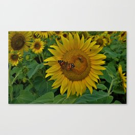 A Thirsty Butterfly Canvas Print