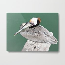 Brown Pelican near Avila Beach Metal Print