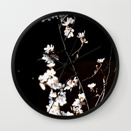 Breathtaking Branch Of Japanese Apricot. White Flowers, Black Background Wall Clock