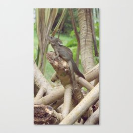 Jesus Lizard Canvas Print