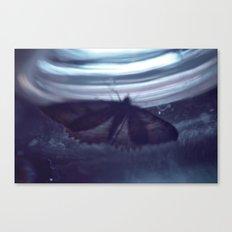 Moth-2 Canvas Print