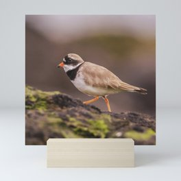 The little Ringed Plover Mini Art Print