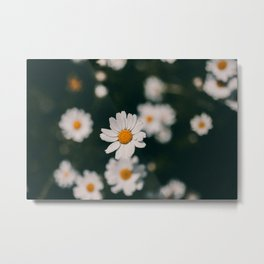 The Dark Daisy Metal Print