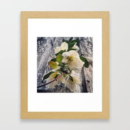 Beautiful White Clematis Flowers Hanging Over a Fence Framed Art Print