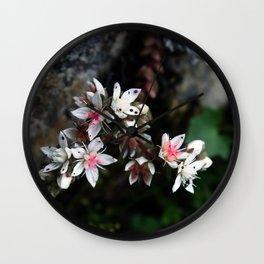 White stonecrop - Sedum Wall Clock