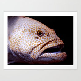 Coral Grouper Being Cleaned Art Print