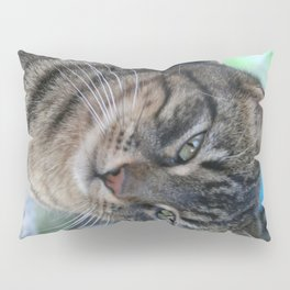 Inquisitive Tabby Cat With Green Eyes  Pillow Sham