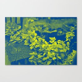 Pop Art Plants Canvas Print