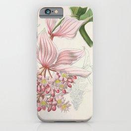 Flower Magnificent Medinill medinilla magnifica1 iPhone Case