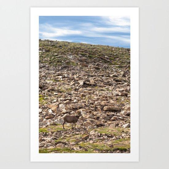 Bighorn Sheep, Rocky Mountain National Park Art Print