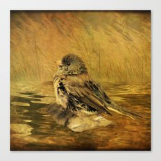 The Bathing Junco Canvas Print