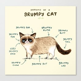 Anatomy of a Grumpy Kitty Canvas Print